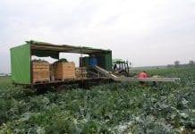GUS: Wstępny szacunek zbioru warzyw w 2019