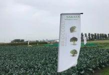 Międzynarodowe Dni Otwarte firmy Sakata w Zwaagdijk, w Holandii