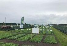 Kolekcja odmian warzyw Seminis w Enkhuizen, w Holandii