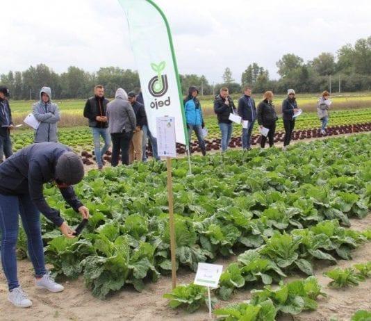 DEMO FARMA 2019 – wrześniowe plony