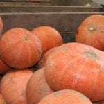 W gorączce zbiorów warzyw trzeba pamiętać o bezpieczeństwie