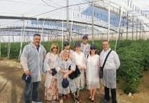Hiszpańskie pomidory pod specjalną ochroną