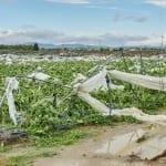 Południowe Włochy – zalane pola i tunele foliowe zrównane z ziemią