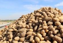 Ziemniaki jadalne – stały dodatek w miesięczniku Warzywa