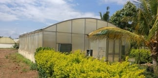 Produkcja warzyw pod osłonami w Indiach