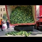 Hiszpański protest – tysiące kilogramów brokułów i kalafiorów wylądowało na ulicy