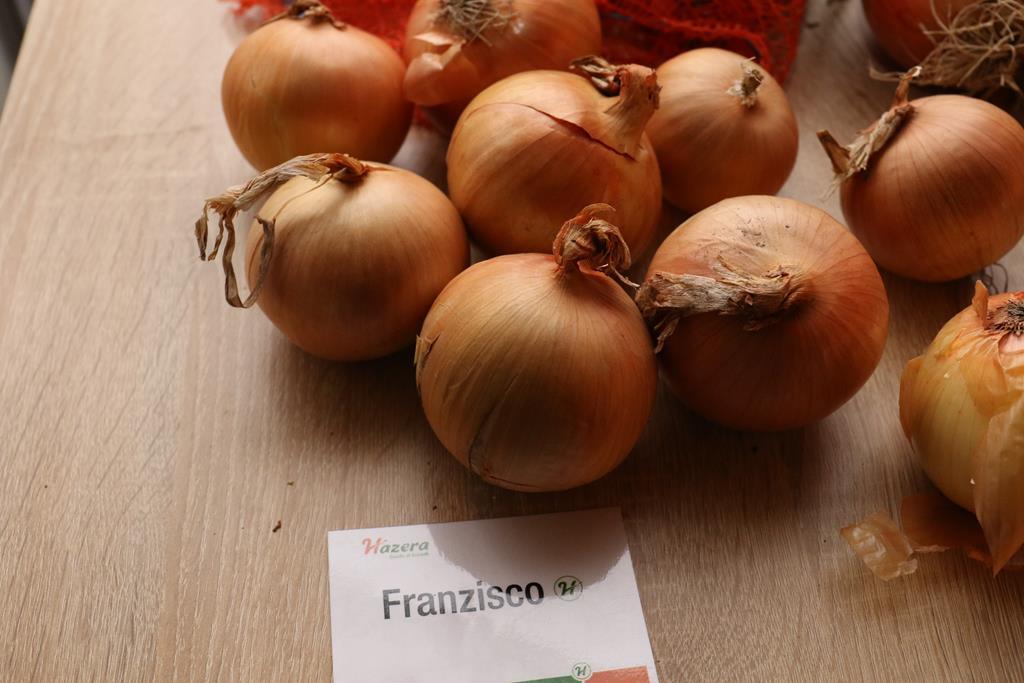 Franzisco_cebula